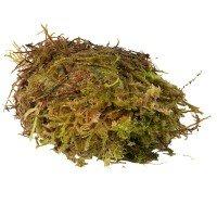 HabiStat Sphagnum Moss 250gr