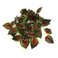 Pangea Leafy Vine Caladium