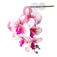 Pangea Reptile Hanging Orchids White